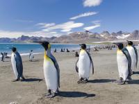 Antarctica Cruises