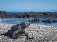 Punta Espinoza, Fernandina Island, Galapagos, Ecuador