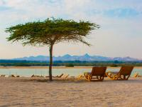 Sir Bani Yas, United Arab Emirates