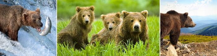 Alaska's Bears & Bear Watching