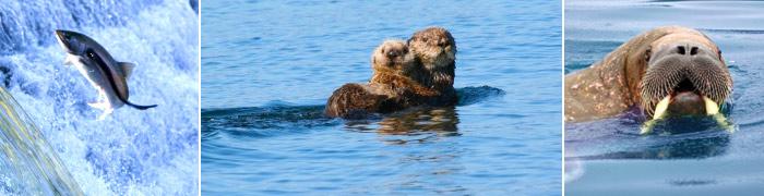 Marine Life in Alaska
