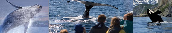 Alaska's Whale & Whale Watching