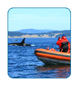 ltmcc.com answers your questions about Shore Excursions.