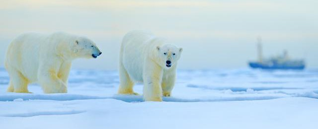 Cheap Arctic Cruises