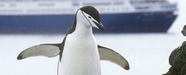 Arctic Cruises And Travel Quark Expeditions.html | Autos