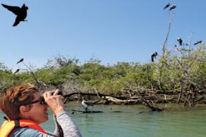 UnCruise Birding/Ornithology